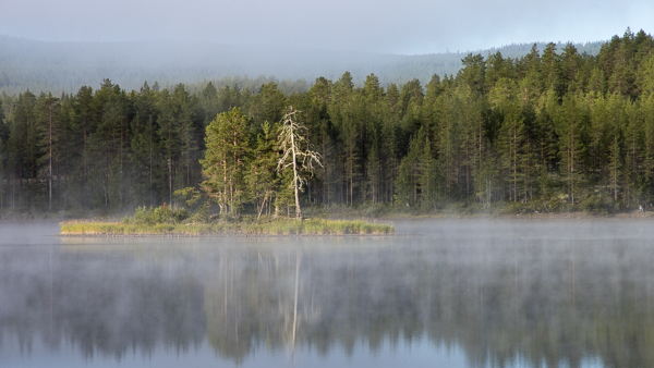 Morgennebel am Österdalälven